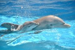 DolphinsSweetTwo